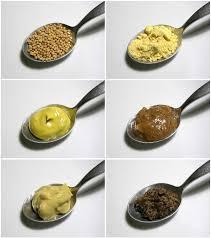 moutarde blanche en cuisine moutarde condiment wikipédia