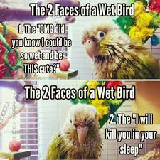 Crazy Bird Meme - bunia is definitely the second type parrot humor pinterest