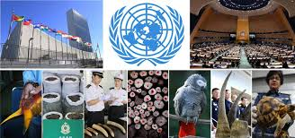 cites welcomes powerful new un resolution on tackling illicit