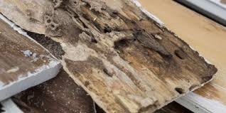 how to tell if your hardwood floors termite damage