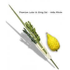 lulav holder sukkos premium lulav etrog set arba minim 4 species