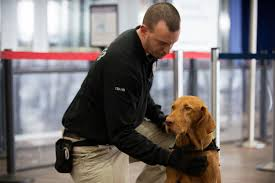 the tsa dog adoption program needs good humans to adopt dogs who