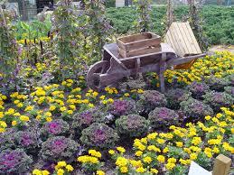 winter organic gardening inthe desert going organic magazine