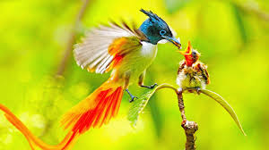 national geographic animals 2017 bbc planet earth birds of