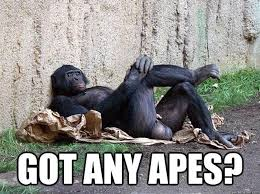 Ape Meme - simple 23 ape meme wallpaper site wallpaper site