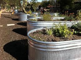 horse trough gardening blog dbg herb garden planters 2011 12 24