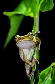 tree frog images pixabay free pictures