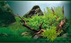 Aquascaping Plants Aquascaping Sand Gravel Or Soil U2013 Which Is Best