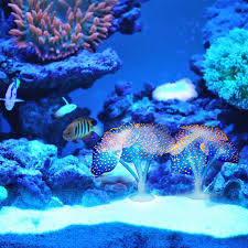 high quality ornamental fish production promotion shop for high