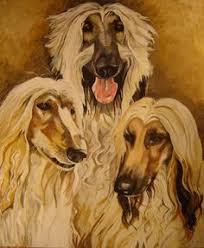 afghan hound jackets a little impartial afghan hound dog print art afghan hound