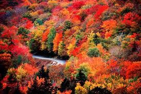 england u0027s fall foliage ultimate guide irish visitors