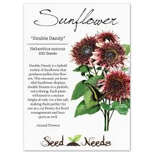 Where Is The Pollen Produced In A Flower - amazon com package of 100 seeds double dandy sunflower