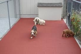 best flooring with dogs gurus floor