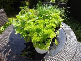 gardening on a tight budget ideas on how to make an interesting