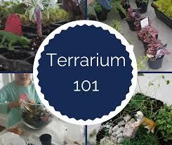 how to make a terrarium fillmore container