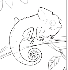 chameleon coloring pages getcoloringpages com