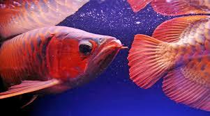 fish 3 jpg quality u003d90 u0026strip u003dall u0026strip u003dall