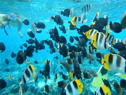 Louisiana snorkeling images The girls swimming in the crystal clear waters of bora bora jpg