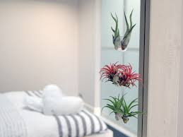 bathroom design amazing bathroom flowers and plants bathroom