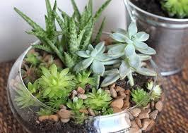indoors garden bringing life indoors garden bulb blog flower bulbs garden tips