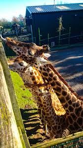 30 best blackpool zoo images on pinterest blackpool fc zoos and