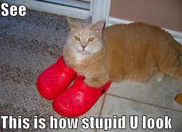 Lol Cat Meme - are lolcats making us smart the atlantic