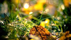 autumn desktop hd wallpaper nature