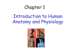 What Is Human Anatomy And Physiology 1 Introduction To Human Anatomy And Physiology Ppt Video Online