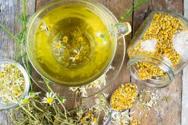 growing chamomile how to grow chamomile herb at home