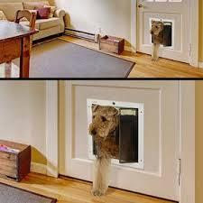 Interior Pet Door For Cats Pet Door Buying Guide Wayfair