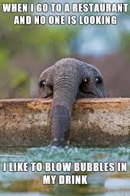 Elephant Meme - baby elephant getting a drink on pics