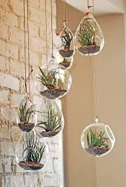 hanging air plant 15 great storage ideas for the kitchen anyone can do 2 air plants