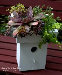turn an ordinary birdhouse into a wonderful succulent planter with