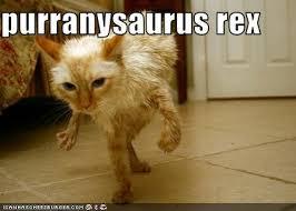 Funny Dinosaur Meme - image funny pictures cat s dinosaur jpg fossils and archeology