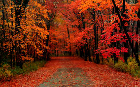 love catcher chapter 19 story autumn would bring autumn