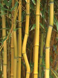 landscaping how to taming invasive bamboo hgtv