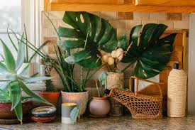 plants for on top of kitchen cabinets the 15 best houseplants for your kitchen