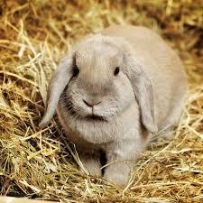 rabbit pet n pony