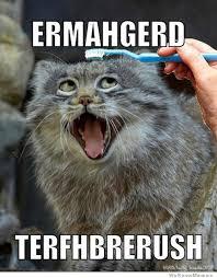 Ermahgerd Animal Memes - 20 derpiest ermahgerds smosh