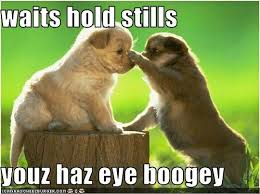 Puppy Eyes Meme - waits hold stills youz haz eye boogey i can has cheezburger
