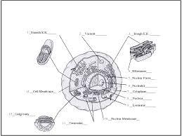 100 cell membrane labeling worksheet animal cell diagram