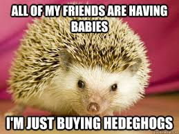 Hedgehog Meme - history hedgehog memes quickmeme