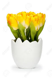 colorful tulip flowers in the white pot stock photo picture and