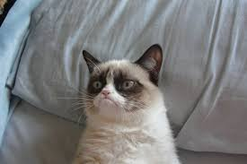 Meme Generator Cat - grumpy cat good meme generator