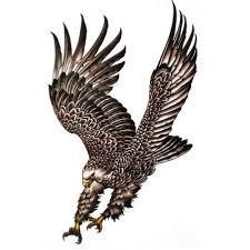 eagle amazon com