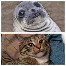 Awkward Seal Meme - my cousins kitten and uncomfortable situation seal are long lost