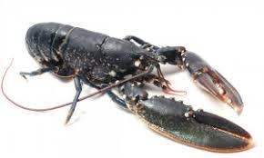 comment cuisiner un homard le homard comment le choisir