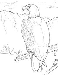 bald eagle coloring pages pixelpictart com