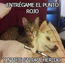 Gato Meme - cu磧nto cabr祿n se acab祿 el juego el gato quiere el punto rojo y