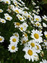 free image of assorted wild garden flowers in summer